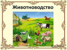 Презентация на тему Животноводство животноводство Отрасль  Животноводство
