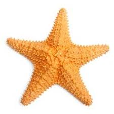 starfish definition and meaning collins english dictionary picture of starfish