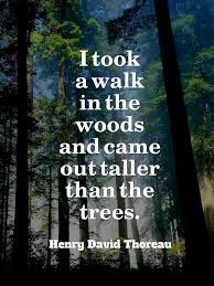 Thoreau Quotes Impressive I Took A Walk In The Woods Thoreau [48x48] QuotesPorn