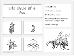 Life Cycle Of A Bee Worksheet 2 Studyladder Interactive
