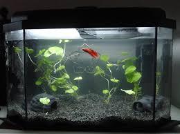 Decorative Betta Fish Bowls Betta than a Bowl betta fish aquariums betta tank inspiration 3