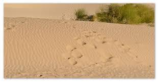 Животные Африки сообщение об обитателях саванн пустынь и  И в пустынях есть обитатели