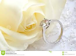 Wedding Background Stock Photo Image Of Pretties Rose