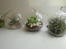 glass hanging planters terrariums cape town in idyllic succulentcacti