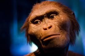 Resultado de imagem para lucy australopiteco