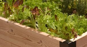 beginner vegetable garden.  Vegetable Organic Vegetable Gardens Bring Special Rewards On Beginner Vegetable Garden G