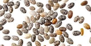 graines medicinales