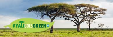 #YALI <b>Goes Green</b>: Protect the Environment | YALI Network