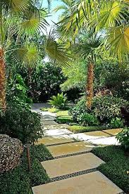 patio palm tree modern palm tree landscaping unique best garden images on than lovely palm tree patio palm tree