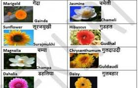 Flower Name In Hindi Meaning