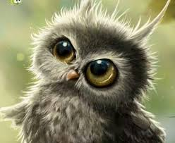 Owlish wonder | Baby owls, Animals, Cute animals