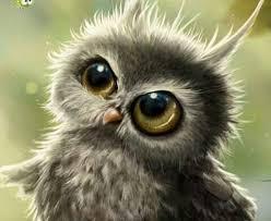 Owlish wonder | Baby owls, Animals, Cute animals