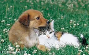 drs foster and smith pet supplies desktop wallpaper