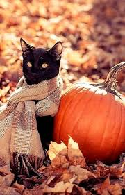 Image result for black cats in fall