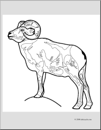 Small Picture Clip Art Bighorn Sheep coloring page I abcteachcom abcteach