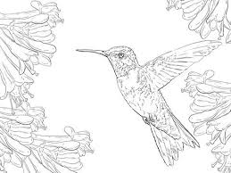 Small Picture 52 best hummingbird images on Pinterest Drawings Hummingbirds