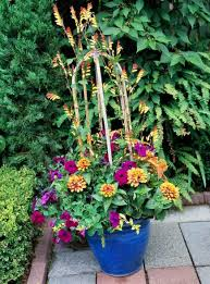 container gardens. vines so fine. can give your container garden gardens