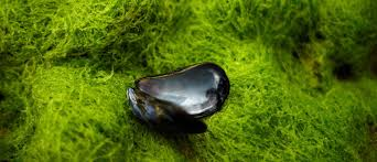 The Climate Crisis Is Cooking Mussels In Their Shells