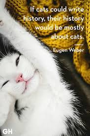 25 Quotes Only Cat Owners Will Understand Prints Cats Kittens