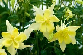 Five Spring Perennials for May - BBC Gardeners' World Magazine