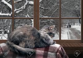 Die Katze Auf Dem Balkon Am Fenster Draußen Vor Dem Fenster Schnee