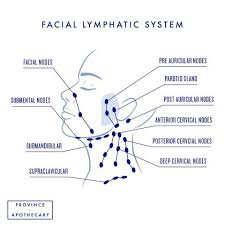 How To Do Lymphatic Drainage Face Neck Bright Body