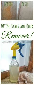 How To Get Urine Smell Out Of Bathroom Amazing DIY Pet Stain And Odor Remover Homemade Products Pinterest