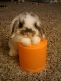 cute baby bunnies with floppy ears. 27 Bunnies That Will Cure Any Case Of The Mondays Cuteness Pinterest Cute Animals Baby And In With Floppy Ears