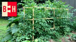 Diy tomato cage Gardens Diy Wood Tomato Cages Youtube Diy Wood Tomato Cages Youtube