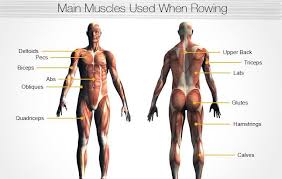 Rowing Machine Pace Chart Rowing Machine Reviews Comparison Chart More