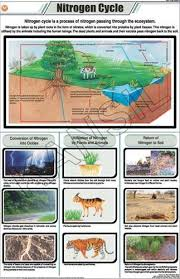 Nitrogen Cycle For General Chart