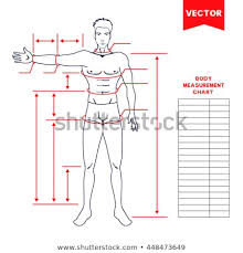 full body measurement chart male body measurement chart scheme measurement stock vector royalty