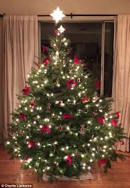 Which Type Of Christmas Tree Should You Buy D U0026 A Dunlevy LandscapersWhat Kind Of Christmas Trees Are There