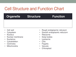 Cell Organelles Structure Function Chart Cell Structure And Function Ppt Download