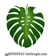 <b>Monstera Leaf</b> Clip Art - Royalty Free - GoGraph