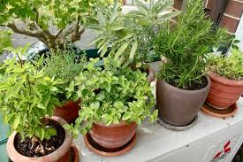 apartment herb garden. Next, It Is Important That You Choose A Good Place For Your Herb Garden. Of Course Entirely Dependent On The Available Space. Apartment Garden E