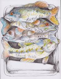 Bass Species Chart Black Bass How Many Species Are There The Fisheries Blog