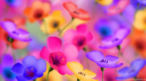 desktop background hd flowers. Simple Desktop Full HD 1080p Flowers Wallpapers Desktop Backgrounds Downloads   Background And Hd E