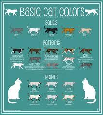 Cat Color Chart Cat Colors Chart Google Search Cat Colors Cats Color