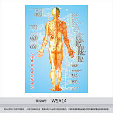 Acupuncture Chart Poster Buy Made Of Human Body Acupuncture Points Chart Flipchart