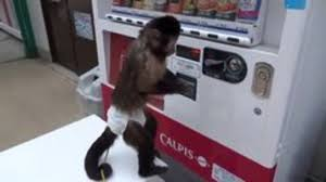 Monkey Uses Vending Machine Mesmerizing Monkey Uses Vending Machine Snotr