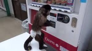 Monkey Vending Machine Simple Monkey Uses Vending Machine Snotr