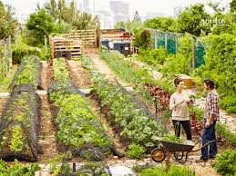 how to plan a vegetable garden layout