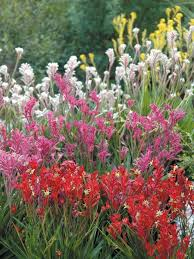 Small Picture Best 25 Australian native garden ideas only on Pinterest