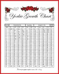Toy Yorkie Growth Chart Yorkie Age Chart Cane Corso Weight Growth Chart How Big Will