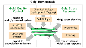 What Is Homeostasis In Biology Research