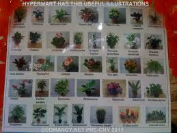 Useful Chart With Photos Names Of Common Plants Chinese