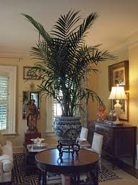 Palm Tree Decor For Living Room Very Taken By The British Colonial Flavor The Palm Gives This Room