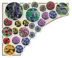 flower garden layouts