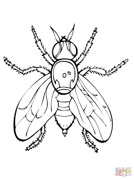 Fly Coloring Pages Select From 28148